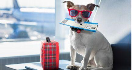 Was tun mit den Haustieren, während man in den Urlaub fährt
