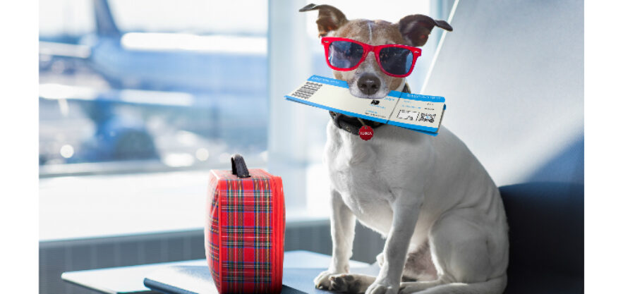 What To Do With Your Pets When You Go On Vacation?